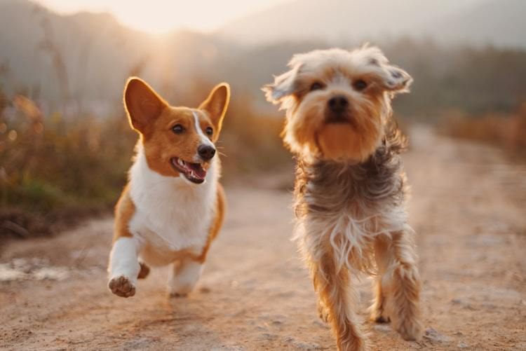 goedkope_hondenverzekering.jpg