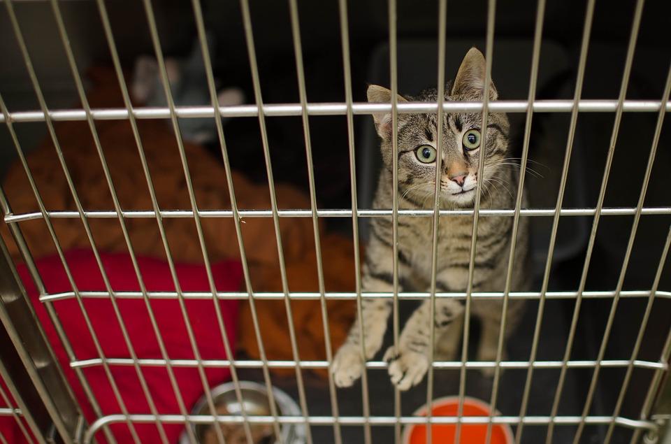 dierenverzekering_kat_vergelijken.jpg