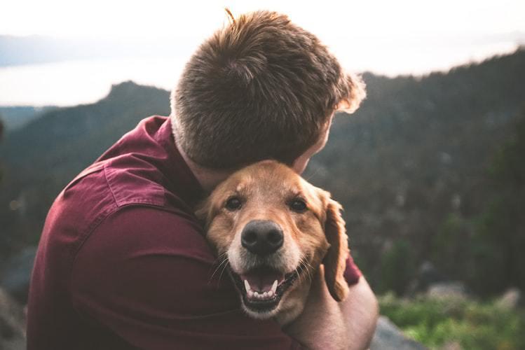 verzekering_hond.jpg