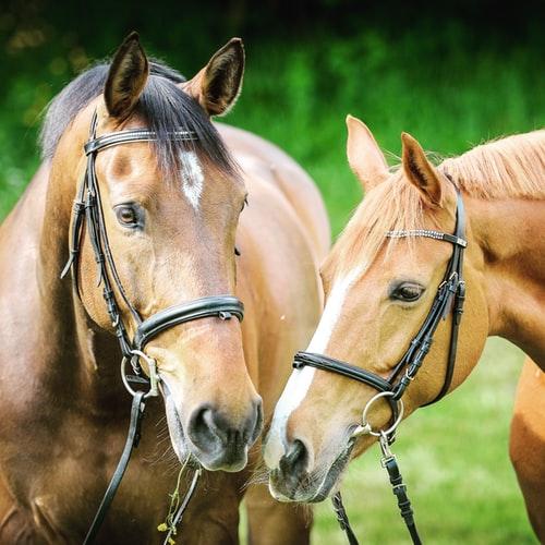 verzekering_paard.jpg