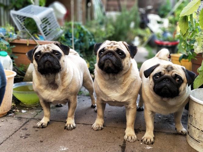 wat_is_de_beste_hondenverzekering.jpg